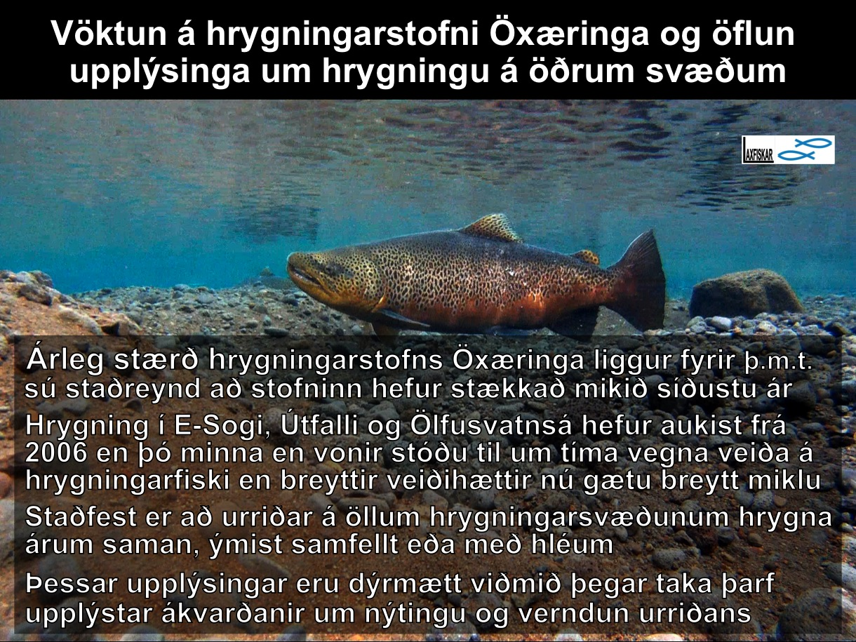 15_thingvallaurridi_vatn_rannsoknir_nidurstodur_daemi_ii_research_results_brown_trout-copyright-johannes_s_laxfiskar.is