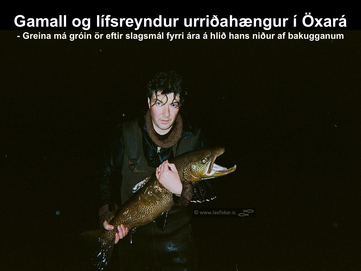 3_thingvallaurridi_haengur_stor_isaldarurridi_oxara_thingvallavatn_giant_brown_trout-johannes_sturlaugsson_laxfiskar.is