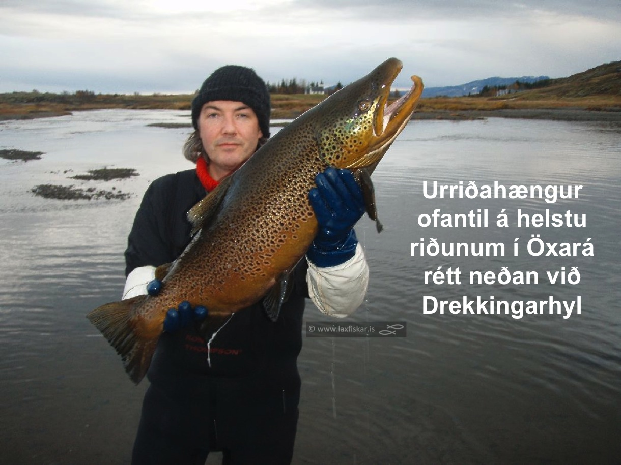 4_thingvallaurridi_stor_isaldarurridi_oxara_thingvallavatn_giant_record_brown_trout-johannes_sturlaugsson_laxfiskar.is