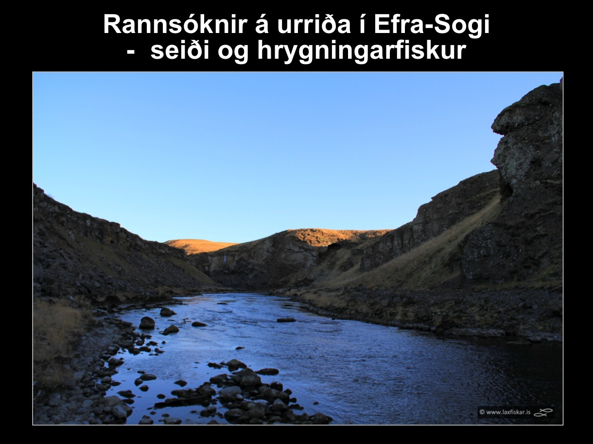 29_thingvallaurridi_rannsoknir_lake_thingvallavatn_river_efra_sog_study_area_brown_trout-copyr.-laxfiskar.is