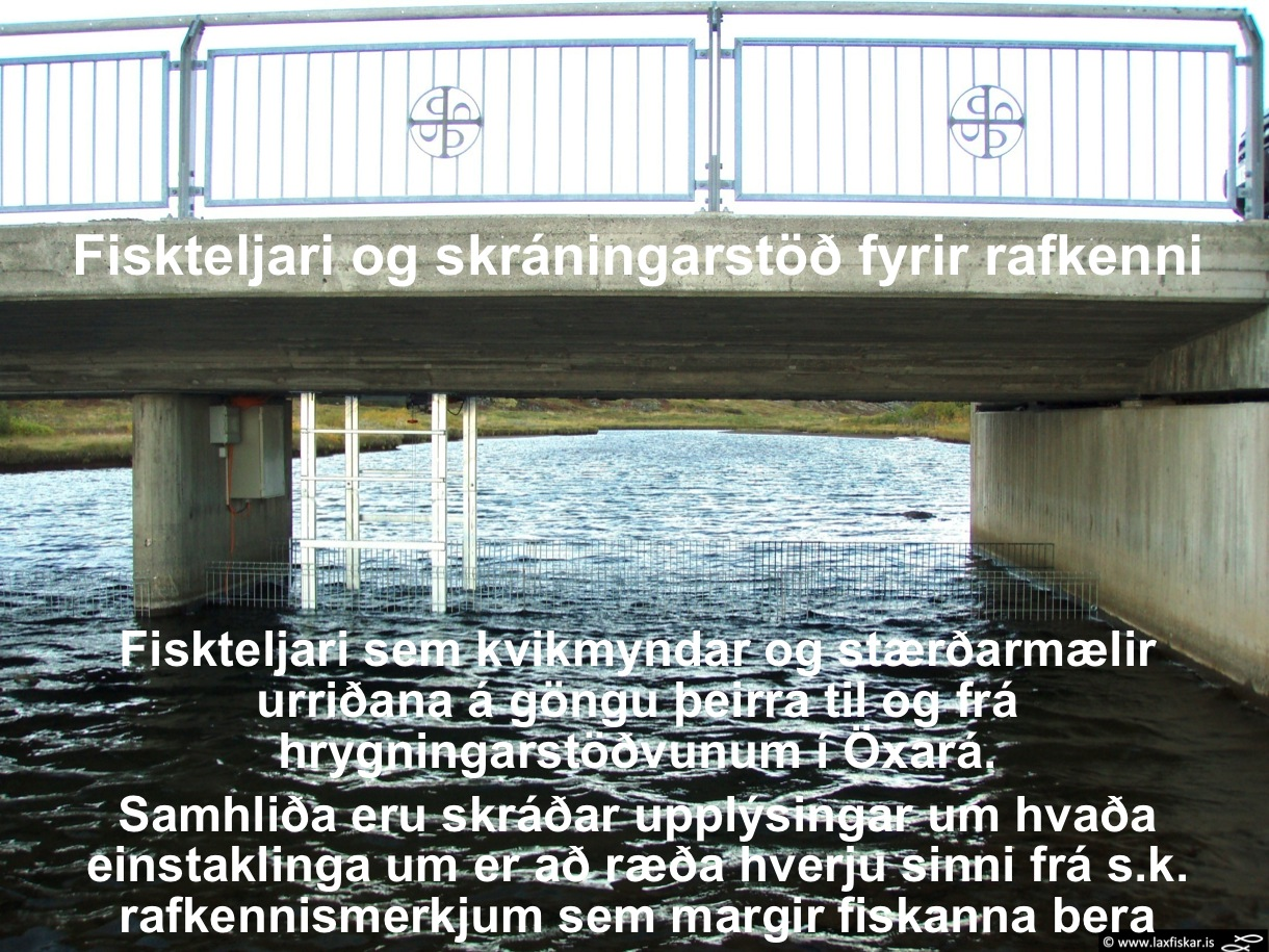 6_thingvallaurridi_fiskteljari_oxara_thingvallavatn_fish_counter_pit_spawning_monitoring_brown_trout-copyr.-laxfiskar.is