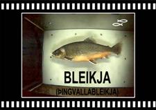 Bleikja-Arctic-Charr-Oxara-Thingvallavatn-Copyright-Laxfiskar.is-225x169